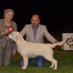 Golden Retriever Punta Serenin Campeones