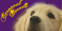 Carnaval Dorado Golden Retriever