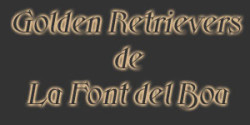 Font del Bou Golden Retriever