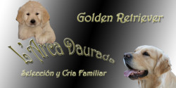 L'arca Daurada Golden Retriever