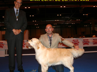 Golden Retriever Campeon de España 2011 Punta Serenin Penelope