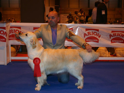 Golden Retriever Punta Serenin Penelope monografica Madrid 2011
