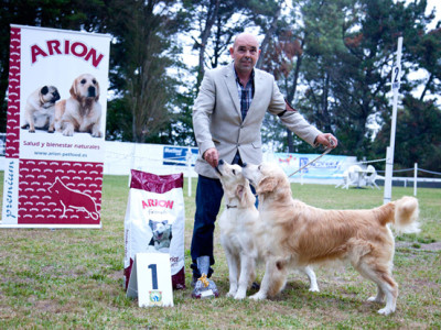 Golden Retrievers Au Revoire Paris y Punta Serenin Penelope
