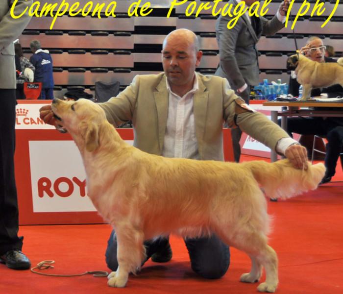 Golden Retriever Campeón de Portugal 2011 Punta Serenin Penelope